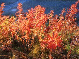 2007 Herbst (39)
